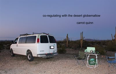 Co-Regulating With the Desert Globemallow by Carrot Quinn