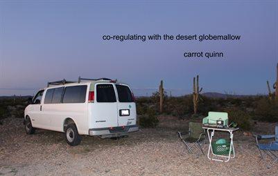 Co-Regulating With the Desert Globemallow by Carrot Quinn