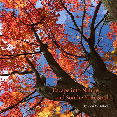 Escape into Nature... and Soothe Your Soul