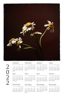 2022 Poster Calendar Daisy