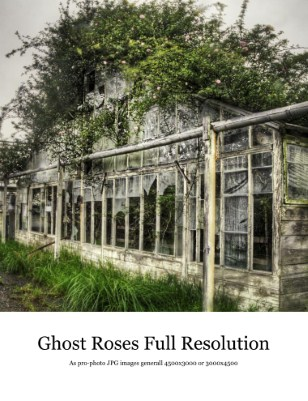 Ghost Roses of Sakai - A Glimpse of the Past