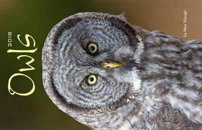 2018 Owls Calendar
