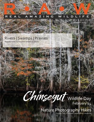 R • A• W | Real Amazing Wildlife January 2018