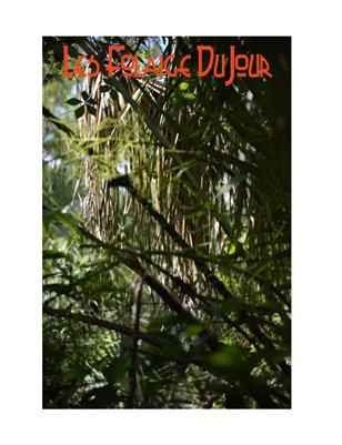 Les Foliage DuJour Sept