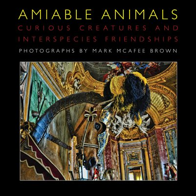Amiable Animals - Curious Creatures and Interspecies Friendships