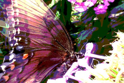 Purple Wings: Posterized Butterfly