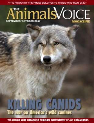 Killing Canids: The War on America's Wild Canines