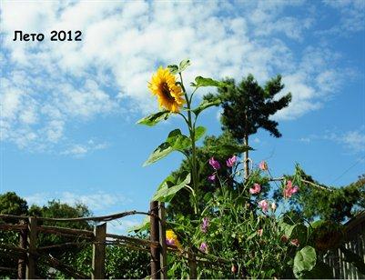 2012 Summer