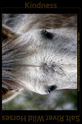 Kindness - Inspirational Poster - Salt River Wild Horses