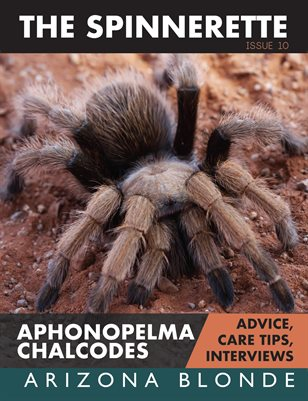 The Spinnerette Issue 10: Aphonopelma chalcodes