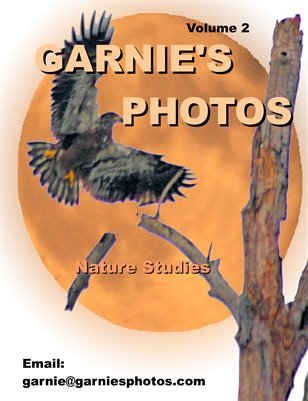 Garnie's Photos: Nature Studies