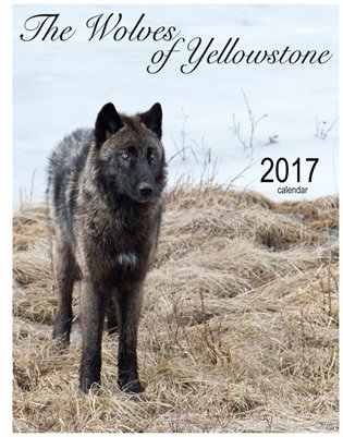 The Wolves of Yellowstone calendar 2017