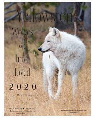 Yellowstone Wolves We Have Loved 2020