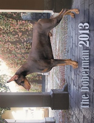 The Doberman 2013