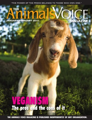 Veganism: The pros and the cons of it