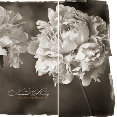 Natural Beauty—Platinum/Palladium Photographs by Brigitte Carnochan