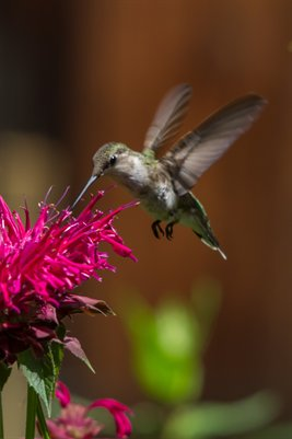 Anotherhummingbird