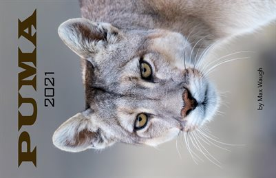 2021 Puma Calendar