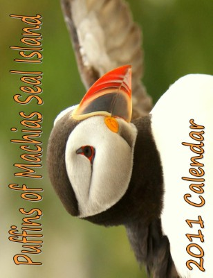 Puffins of Machias Seal Island