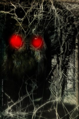 Mothman Hiding