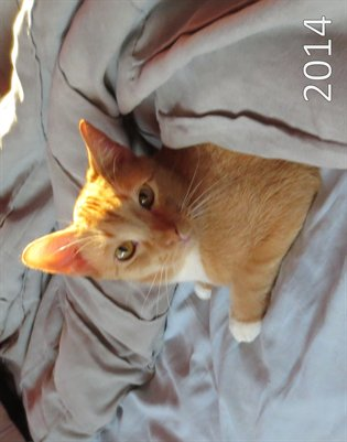 Calendar: Kitty Cats 2014