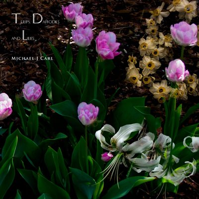 Tulips, Daffodils and Lilies