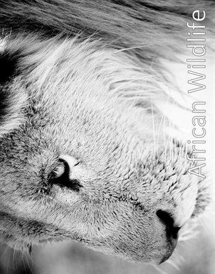 African Wildlife 2014 Calendar