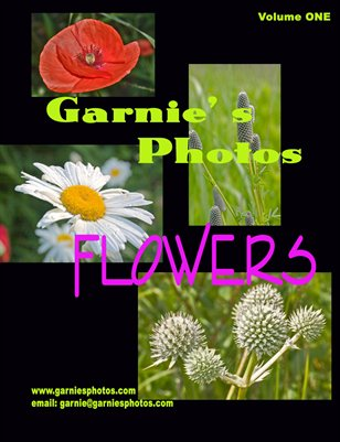 Garnie's Photos: Flowers