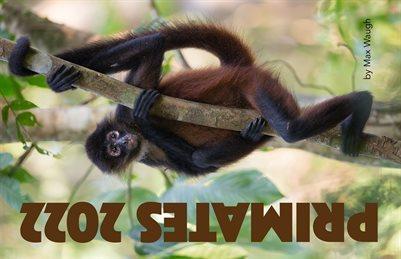 2022 Primates Calendar