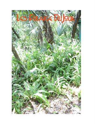 Les Foliage DuJour Six