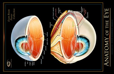 ANATOMY OF THE EYE - Exam Room Poster Collection - Large Size