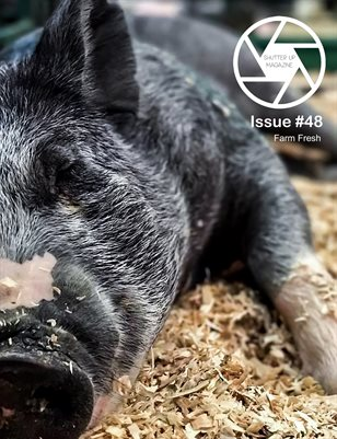 Shutter Up Magazine, Issue 48