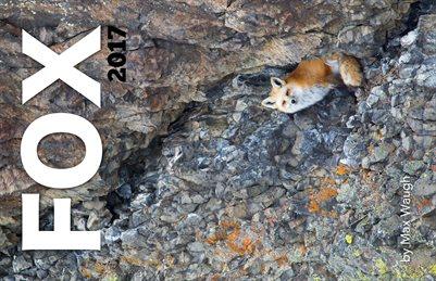 2017 Foxes Calendar