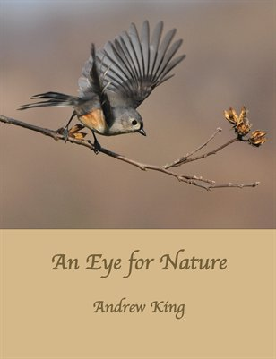 An Eye for Nature