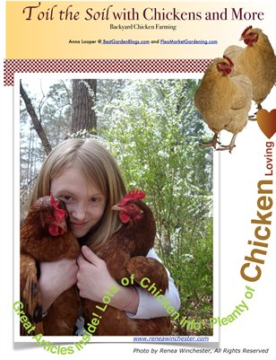 Toil the Soil Online Magazine about Chickens