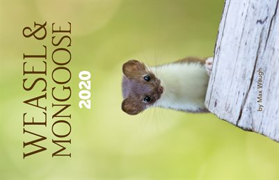 2020 Weasel & Mongoose Calendar