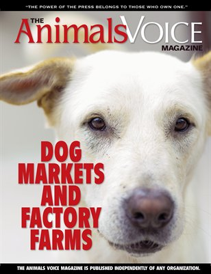 Dog Markets & Factory Farms