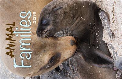 2019 Animal Families Calendar