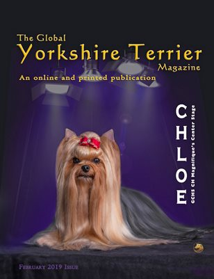 The Global Yorkshire Terrier Magazine - FEBRUARY 2019 issue