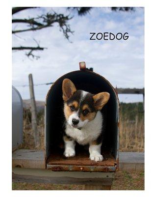 Zoedog