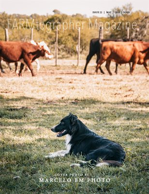 Dogs by FARMtographer Magazine