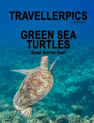 Green Sea Turtles Great Barrier Reef