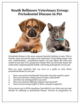 South Bellmore Veterinary Group: Periodontal Disease in Pet