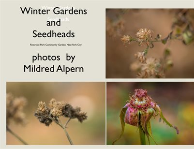 Winter Garden and Seedheads