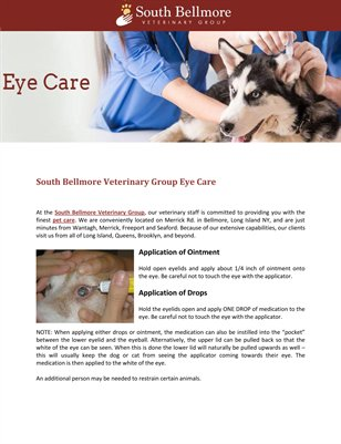 South Bellmore Veterinary Group Eye Care