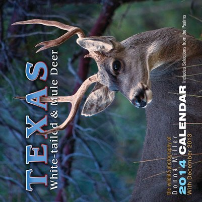 Texas White-Tailed & Mule Deer Calendar