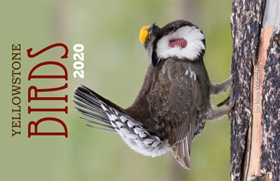 2020 Yellowstone Birds Calendar