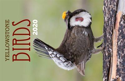 2020 Yellowstone Birds Calendar