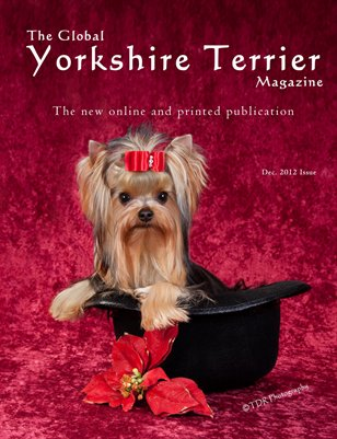 The Global Yorkshire Terrier Magazine -Dec. 2012 issue