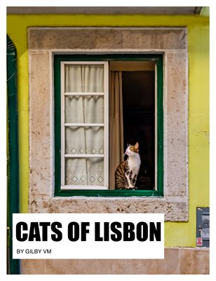 Book - Cats Of Lisbon